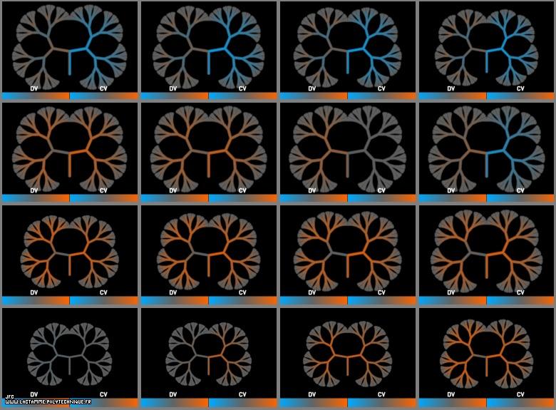 Index of /Mosaic/images/ACIN a1 Exe DV__CV_ 16 D
