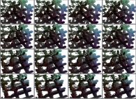 A set of 4x3 stereograms of a tridimensional interpolation between a fractal structure and a cubic mesh
