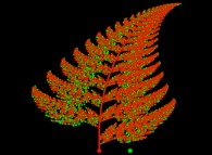 A bidimensional fern computed by means of an 'Iterated Function System' -IFS-