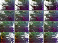 A set of 4x3 stereograms of a tridimensional visualization of the Verhulst dynamics
