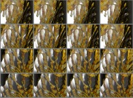 A set of 4x3 stereograms of a close-up on a pseudo-octonionic Mandelbrot set (a 'Mandelbulb')-tridimensional cross-section-